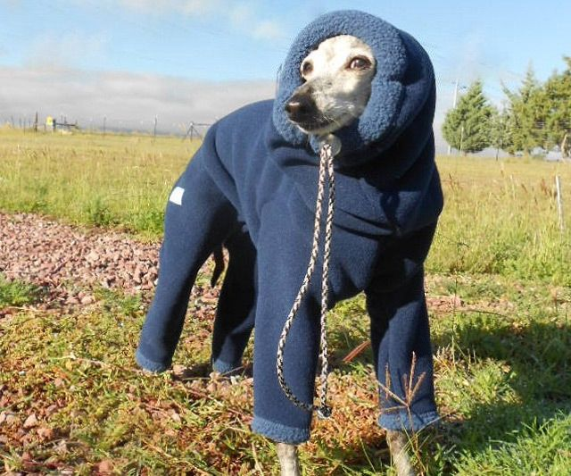 Fleece Snow Suits for Dogs http://www.dudeiwantthat.com/household/pets/dog-snowsuit.asp